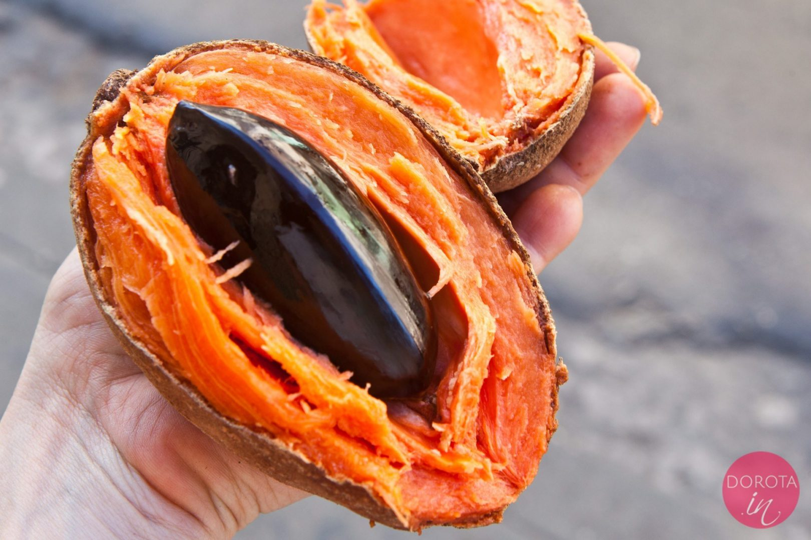 Mameyo - zapote - nietypowy owoc na Kubie