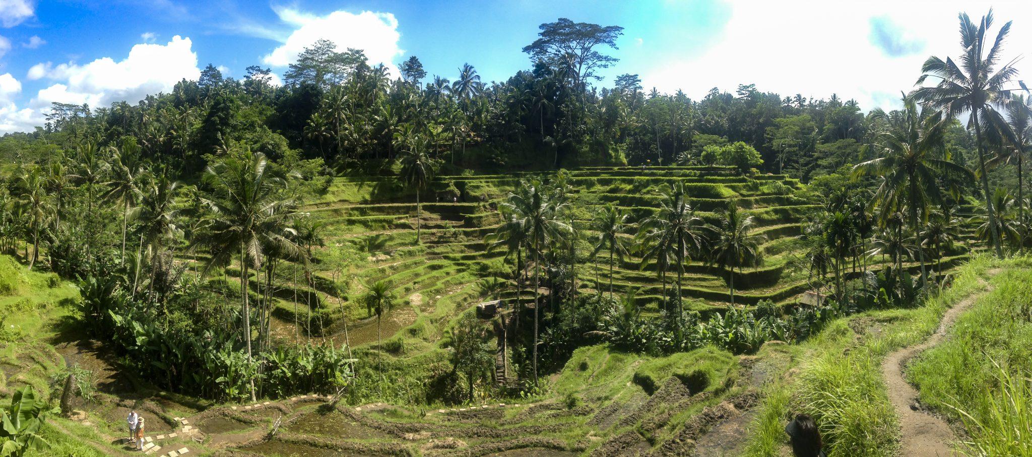 Tarasy ryżowe Tegallalang - Ubud, Bali