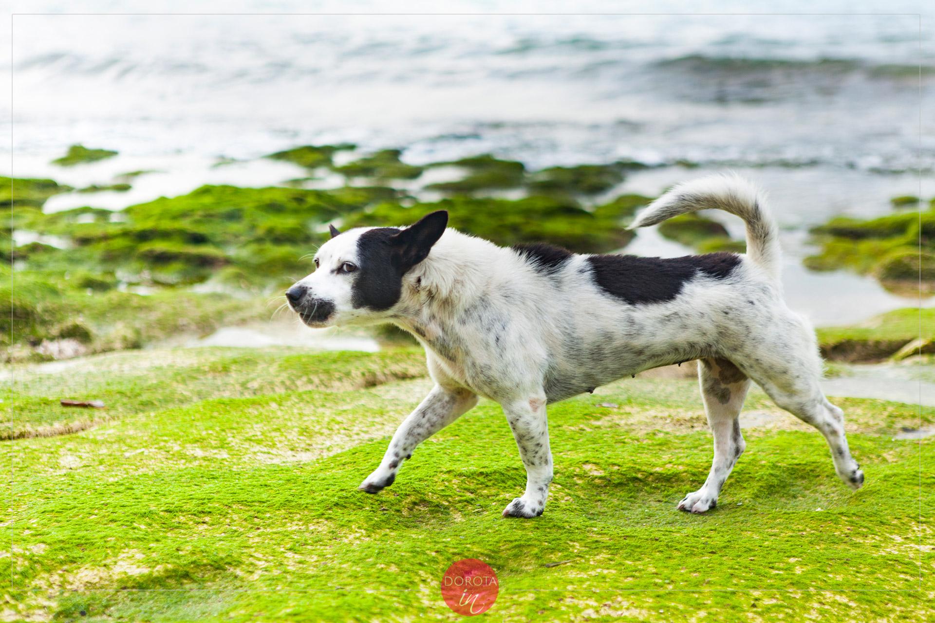Groźne zwierzę na plaży ;)